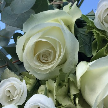 12 Luxury White Roses