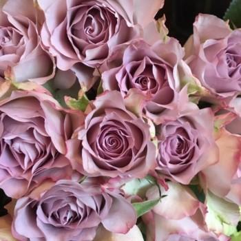 12 Vintage Pink Roses