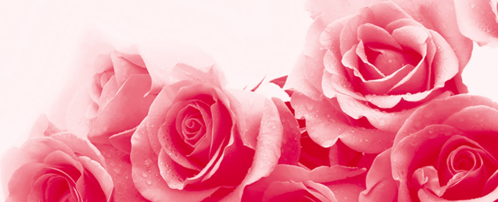Send flowers in Holborn. No delivery fee - same day delivery